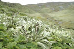 Macquarie Island vegetation. Photo: Noel Carmichael